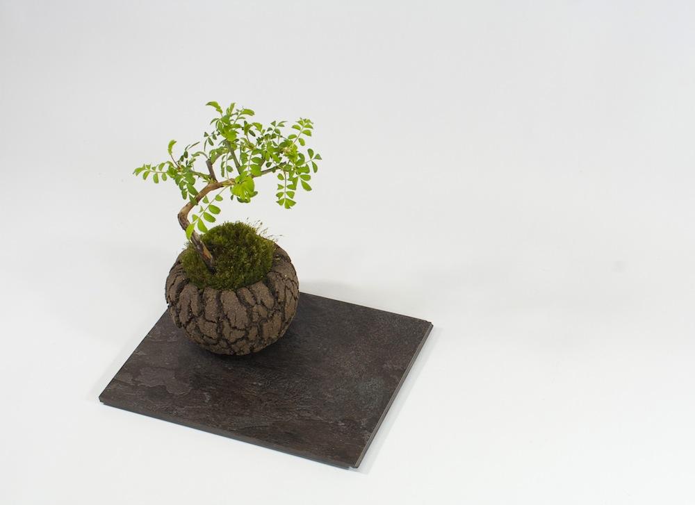 modern-mini-rose-top