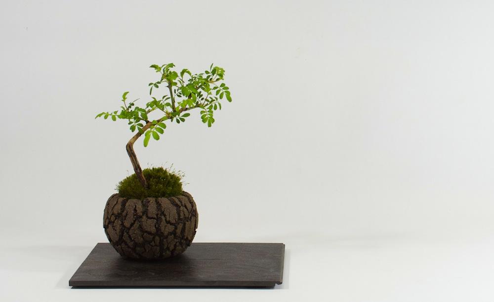 modern-mini-rose