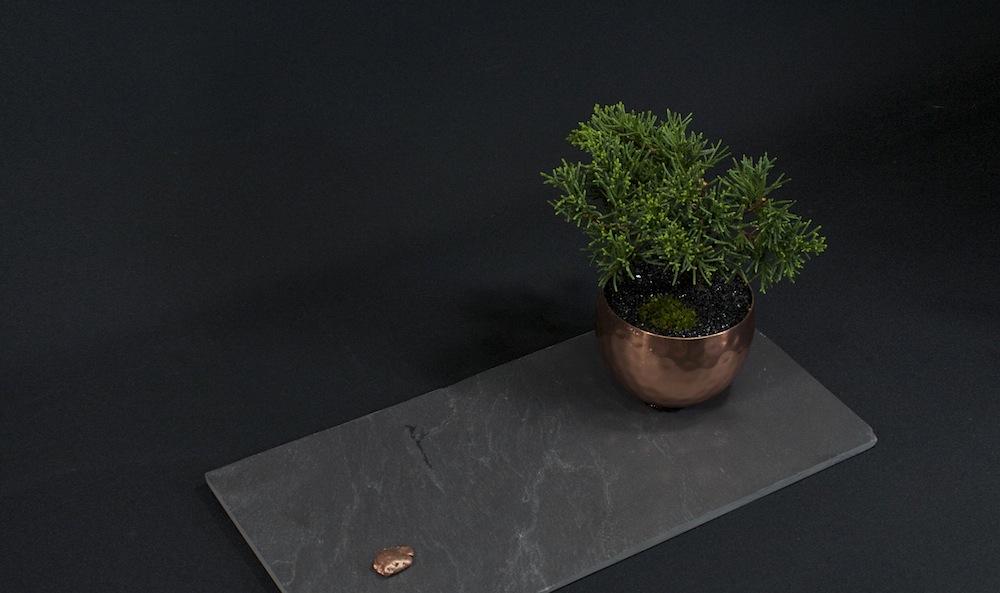 modern-mini-wacholder-top