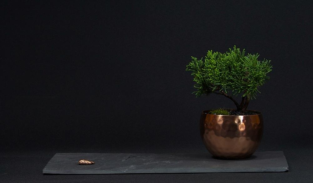 modern-mini-wacholder