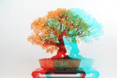 3D Anaglyph Bonsai: Potentilla