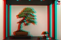3D Anaglyph Bonsai: Tokonoma 2