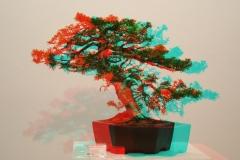 3D Anaglyph Bonsai: Wacholder 1