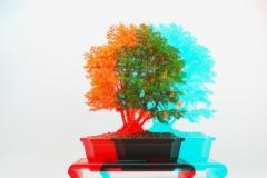 3D Anaglyph Bonsai: Weisszeder