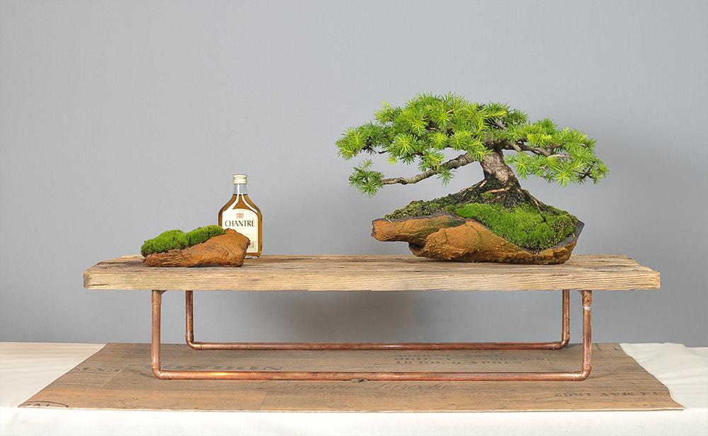 bonsai zone aus ost mach neu um bonsai in die heutige. Black Bedroom Furniture Sets. Home Design Ideas