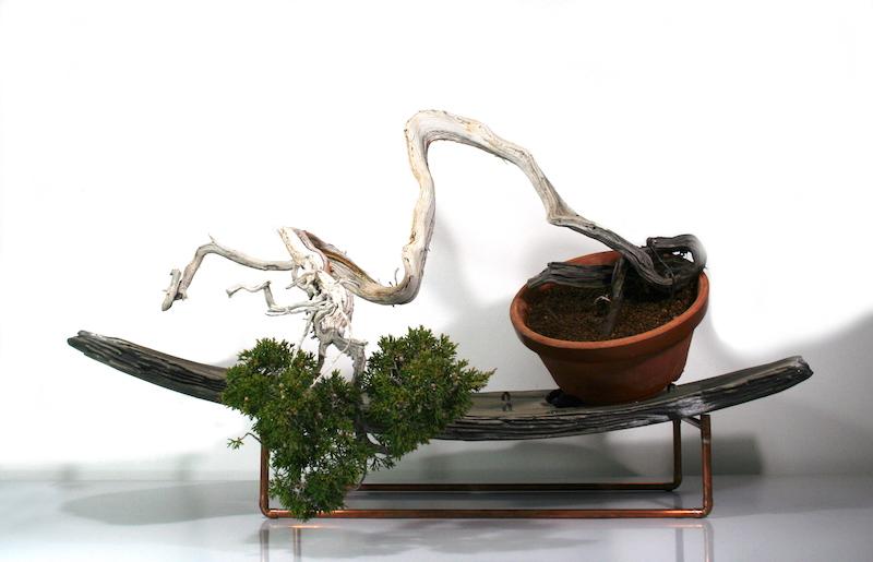 Plastik II: Bonsai Sabina-Wacholder - plastischer Stil